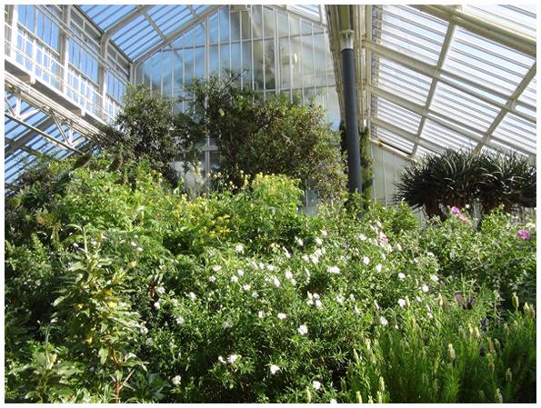 Üppige Flora im Mittelmeerhaus